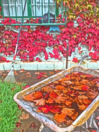 otoño web